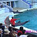 實在是照太多海豚照了,所以就隨便選幾張來放吧