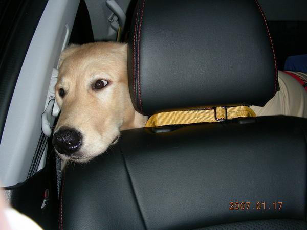 對呀~~阿母~我們要去哪