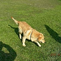 一狗與二影