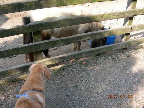 迷你馬與我