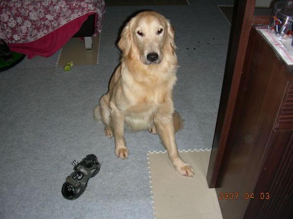 阿母~我不是故意的~~是涼鞋勾引我