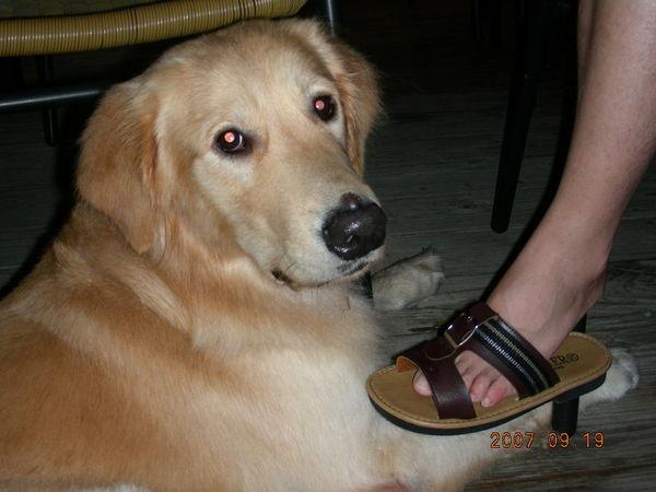 我只能看著阿母的腳,其他什麼都沒得吃
