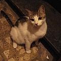 Hadia家的貓-2.JPG
