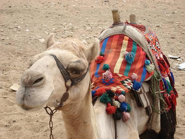 Color camel.JPG
