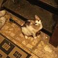 Hadia家的貓-1.JPG