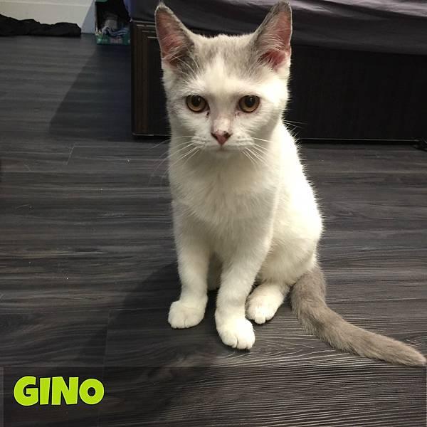 Gino1.jpg