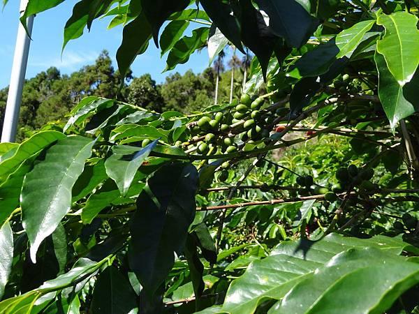 TROPICA 咖啡示範園區