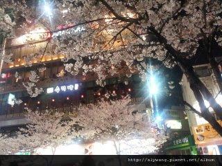 新村櫻花2