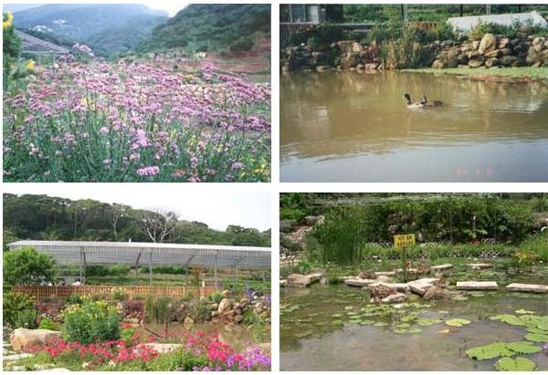 花景2.JPG