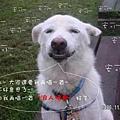 伍佰的浪人情歌p001wa1.jpg