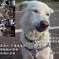 伍佰的浪人情歌p002su1.jpg