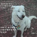 伍佰的浪人情歌p004xi3.jpg