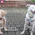 伍佰的浪人情歌p007hg7.jpg