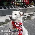 伍佰的浪人情歌p009bk6.jpg