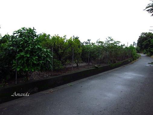 檸檬園旁小道.jpg