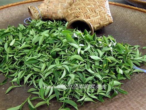 宜蘭-三泰有機農場-採茶-揉茶 三泰有機農場-茶葉