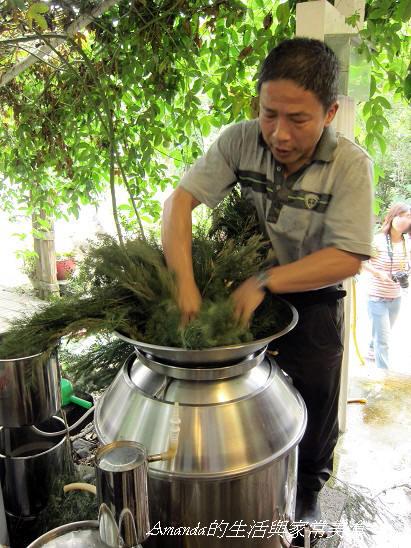 東風有機農場-茶樹精提煉