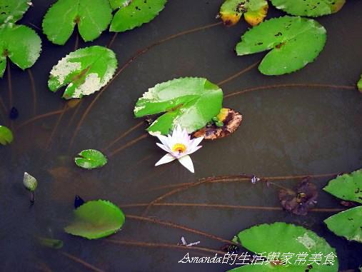 生態池 (1)