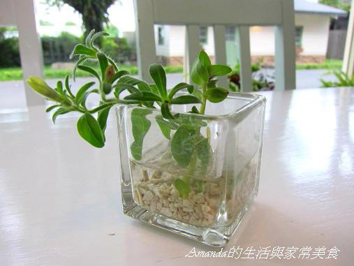 橘之鄉-桌上盆栽 (1)