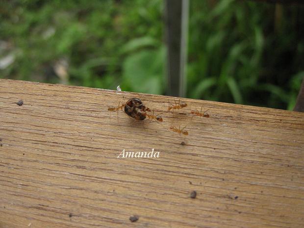 螞蟻搬食物.JPG