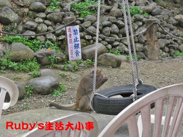 大坑賞猴記 (9).JPG