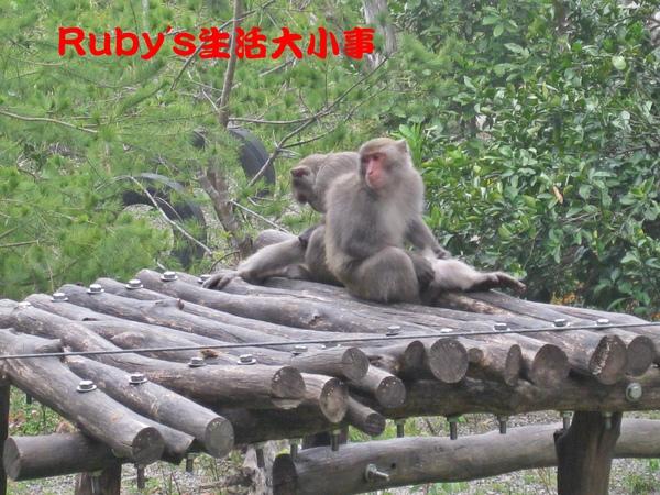 大坑賞猴記 (13).JPG