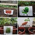 種蔬菜.jpg
