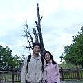 塔塔加夫妻樹.JPG