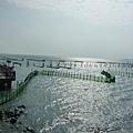 定置漁網.JPG