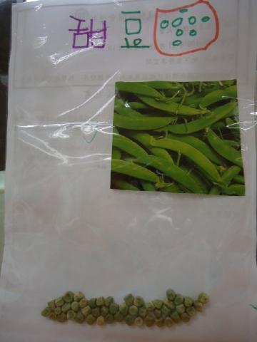 小禎爸爸的「種子書」