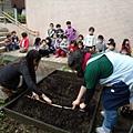 種紅蘿蔔時,先用竹竿壓出長條狀的溝槽