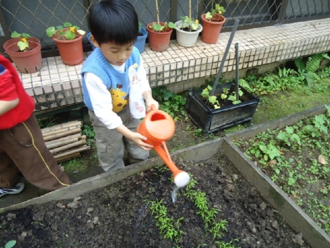 方案活動:今天輪到我們負責觀察與照顧菜園3