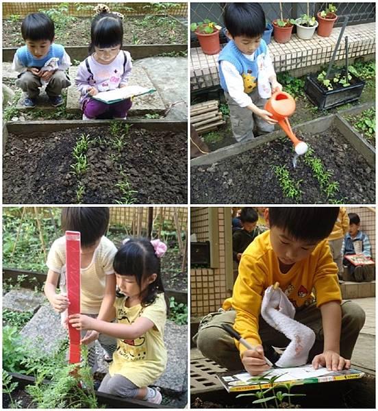 觀察與照顧菜園