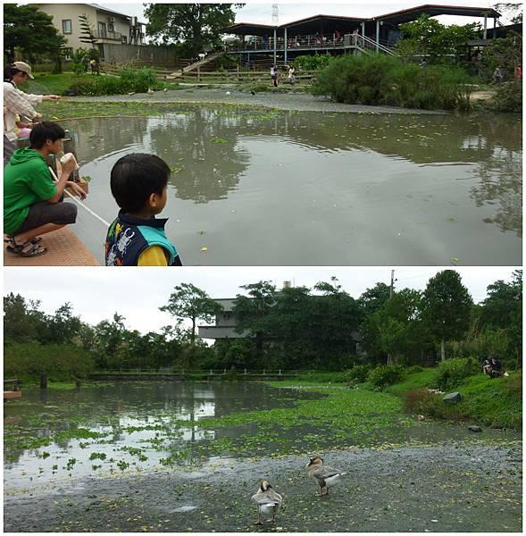 宜農牧羊場魚池