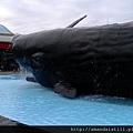 鯨魚親水廣場