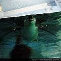 極地企鵝2