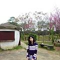 橫山采風館櫻花