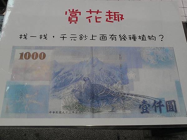 千元鈔植物
