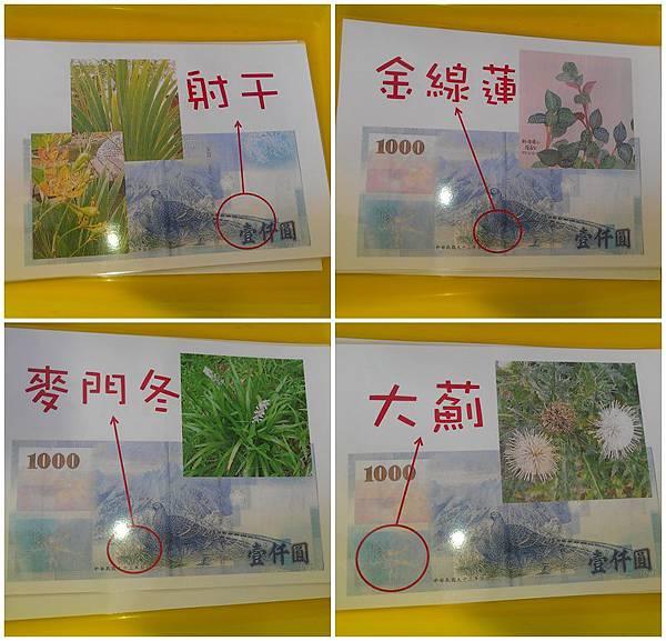 千元鈔七植物2