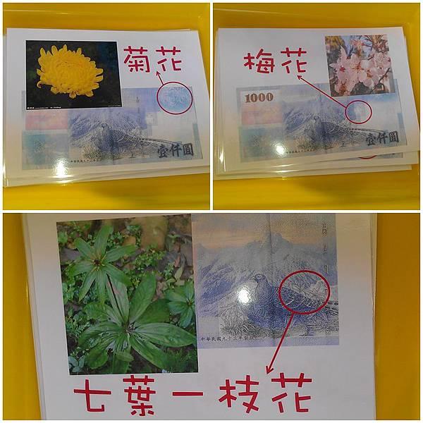千元鈔七植物1