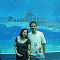 海族館鯨鯊.JPG