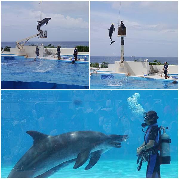 沖繩水族館5.JPG