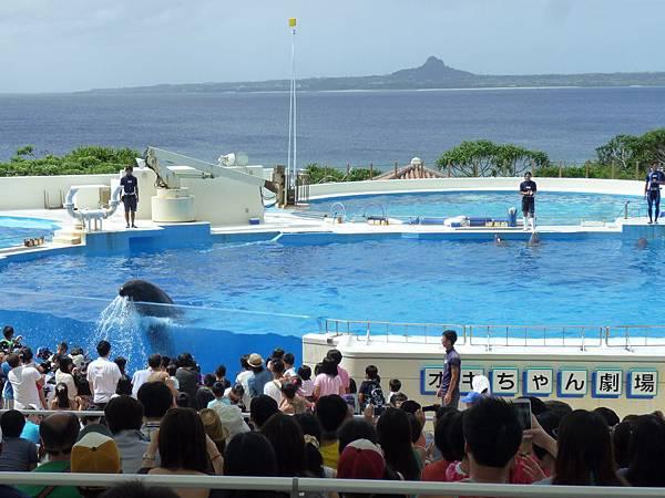 沖繩海水族館海豚表演2