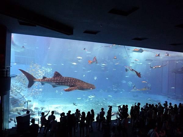 沖繩水族館展示場