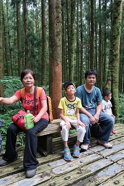 蕨園柳杉.JPG
