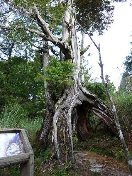 樹洞1.JPG