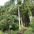 森林知性步道.JPG