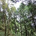原始森林公園3.JPG