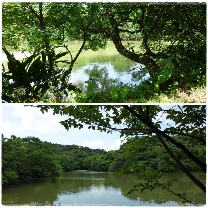 大池塘2.JPG