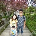 紫葉槭合照.JPG